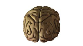 Rotating human brain Stock Photos
