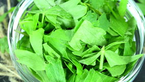 Rotating Lovage (not loopable) Stock Photos