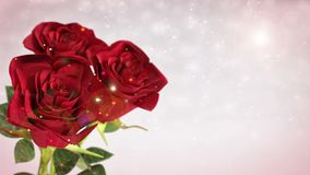 Rotating red roses, wedding, birthday, st. valentines theme - 3D render. seamless loop stock video footage
