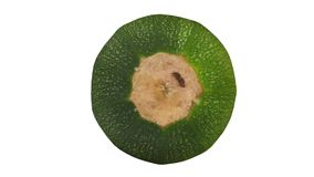 Rotating Round Zucchini on white Background 02 stock video footage