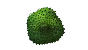 Rotating Soursop Graviola on White Background 02 stock video footage
