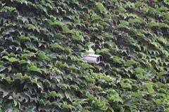 Rotating surveillance camera on brick wall Stock Photos