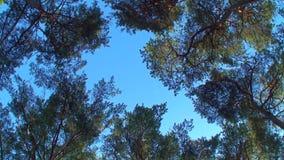 Rotating trees stock video