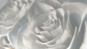 Rotating white roses background theme - 3D render. seamless loop stock video footage