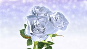 Rotating white roses, wedding theme - 3D render. seamless loop stock footage