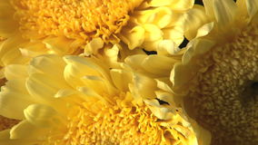 Rotating yellow flower bouquet. Video of rotating yellow flower bouquet stock footage