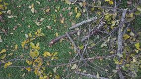 Cut branches on the ground. Rotation around the cut branches laid on the ground, aerial view stock footage