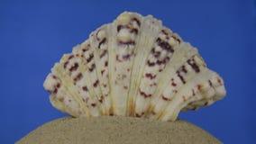 Rotation, coquille brun clair et belle de mer sur le sable D'isolement banque de vidéos