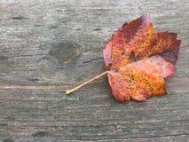 Rotation de feuilles d'automne de chute Photo libre de droits