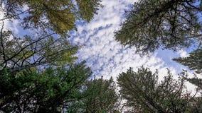 Rotation de forêt banque de vidéos