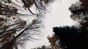 Rotation in den Herbstwald stock video footage