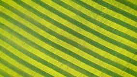 Rotation du jaune et Lignes Vertes de Canola et de blé sur le champ agraire banque de vidéos