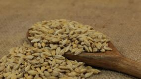 Rotation, heaps of barley grains, falling from a wooden spoon on burlap. Food stock video footage