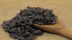 Rotation, heaps of sunflower seeds, falling from a wooden spoon on burlap. Food stock video