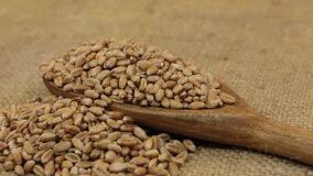 Rotation, heaps of wheat grain, falling from a wooden spoon on burlap. Food stock video footage