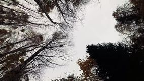 rotation i höstskogen lager videofilmer