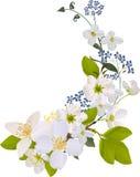 Rotation mit Jasmin- und Kirschblumen vektor abbildung