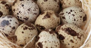 Rotation of small quail eggs.