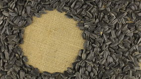 Rotation of the sunflower seeds lying on sackcloth with space for your text stock video