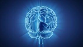 Rotazione brillante del cervello umano illustrazione di stock