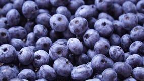 Rotazione organica fresca e matura dei mirtilli Dieta, essendo a dieta, alimento sano del vegano archivi video