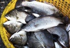 Rotbarsch verkauft in den Meeresfrüchtemärkten Stockbilder