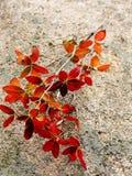 Rotblätter Lizenzfreies Stockbild