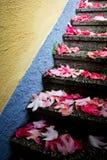 Rotblätter auf Treppen Stockbild