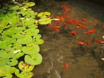 Rotblätter auf grünem Hintergrundmuster Stockfotografie