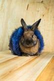 Rotbraune Farbe des Kaninchens Stockfotografie