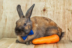 Rotbraune Farbe des Kaninchens Lizenzfreie Stockfotos