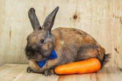 Rotbraune Farbe des Kaninchens Lizenzfreies Stockbild