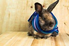 Rotbraune Farbe des Kaninchens Stockbild