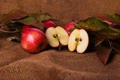 Rote Äpfel auf Aufbauschung stockfotografie