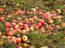 Rote Äpfel auf dem Gras stockbilder