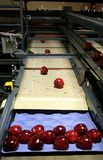 Rote Äpfel auf Tellersegment Lizenzfreie Stockfotografie