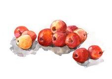 Rote Äpfel auf weißem Hintergrund, Aquarell, Realismus vektor abbildung