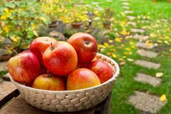 Rote Äpfel in der Schüssel Lizenzfreie Stockbilder