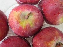 Rote Äpfel in der Schüssel Wasser stockfotos