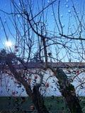 Rote Äpfel in der Sonne lizenzfreies stockfoto