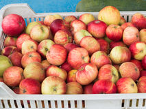 Rote Äpfel in einem Fach Stockbild