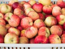 Rote Äpfel in einem Fach Lizenzfreie Stockbilder