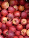 Rote Äpfel in einem Rahmen Lizenzfreie Stockfotografie