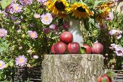 Rote Äpfel im Garten unter Sonnenblumen Stockbild
