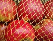 Rote Äpfel im gelben Netz Lizenzfreies Stockbild