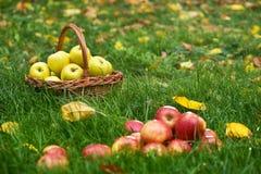 Rote Äpfel im Gras Stockbild