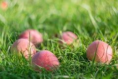 Rote Äpfel im Gras Stockbilder