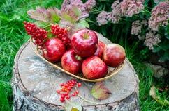 Rote Äpfel im Korb Lizenzfreies Stockfoto