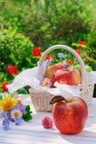 Rote Äpfel im Korb und Blumen im Garten Stockfoto
