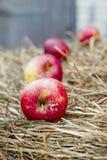 Rote Äpfel im Schnee Stockfoto